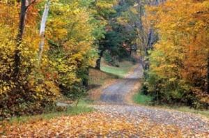 s_curve_leaves_road_tress_f